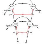 Graf des Begehrens - imagiäre Linien rot