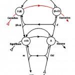 Graf des Begehrens, rote Linie: Linie des Liebesanspruchs